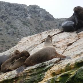 Wo die wilden Pinguine wohnen